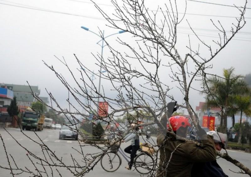 Rét đậm, rét hại xuất hiện ở vùng núi, có băng giá ở đèo Pha Đin