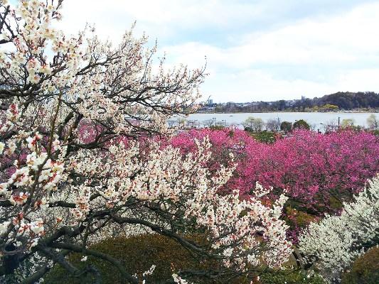 Lạc bước nơi 'thiên đường hoa bốn mùa ở hạ giới'
