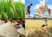 """Việt Nam đang vướng """"bẫy"""" xuất khẩu gạo giá rẻ sang Trung Quốc?"""