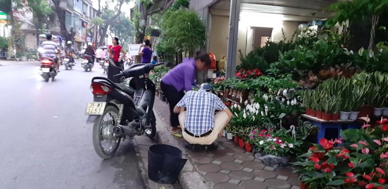Lộn xộn chợ hoa, cây cảnh trên đường Hoàng Hoa Thám