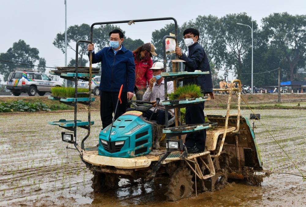 Bí thư Thành ủy Vương Đình Huệ xuống đồng cấy lúa, động viên nông dân