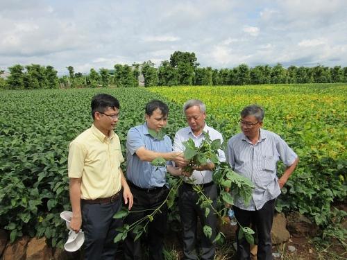 Bước tiến mới trong nghiên cứu và chọn tạo giống đậu nành