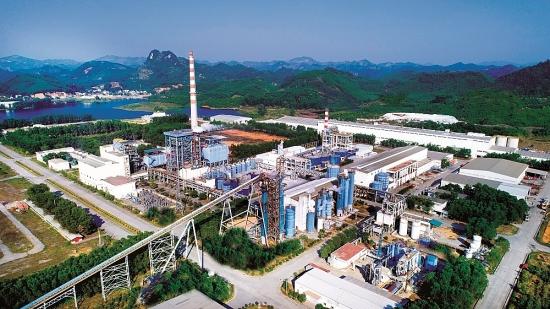 Phát triển vùng nguyên liệu làm giảm gánh nặng cho ngành giấy
