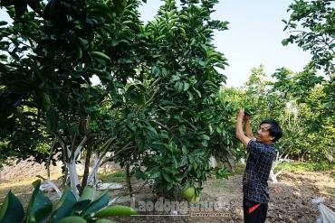 Huyện Thanh Oai: 86,1% lao động có việc làm sau khi được dạy nghề