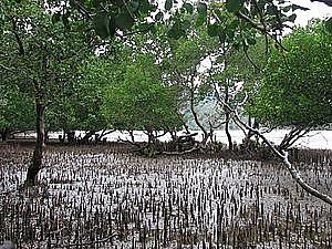 Phát động cuộc thi vẽ tranh về rừng ngập mặn bảo vệ đời sống