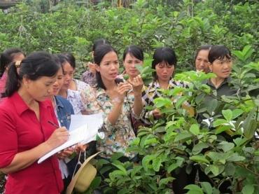 Quận Hà Đông: Hiệu quả từ việc nhân rộng các mô hình điểm sản xuất nông nghiệp