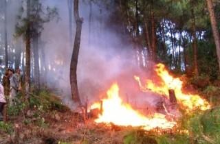 Cảnh báo khẩn cấp nguy cơ cháy rừng ở 19 tỉnh