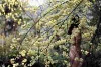 Tụt bỏ quần áo để... hôn nắng ôm cây trong rừng