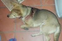 Hà Nội: Nửa đêm vác hung khí chém chó, làm loạn nhà hàng xóm