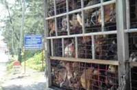 Thế giới 'choáng' Việt Nam giết 5 triệu con chó/năm