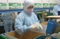 Chiêu lừa mới quanh việc xuất khẩu lao động sang Nhật