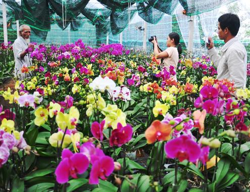 4-1-Anh-1-Phong-lan-1534-1388885977.jpg