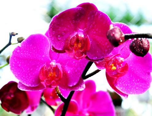 4-1-Anh-2-Phong-lan-1827-1388885977.jpg