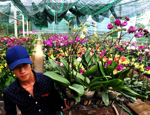 4-1-Anh-6-Phong-lan-8921-1388885978.jpg