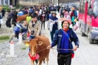 Viettel trao tặng bò giống giúp đồng bào nghèo khu vực biên giới