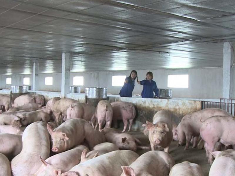 Vi phạm hành chính về lĩnh vực thức ăn chăn nuôi, thủy sản phạt đến 200 triệu đồng