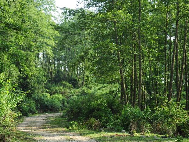 Hướng dẫn xếp lương viên chức ngành khuyến nông, quản lý bảo vệ rừng