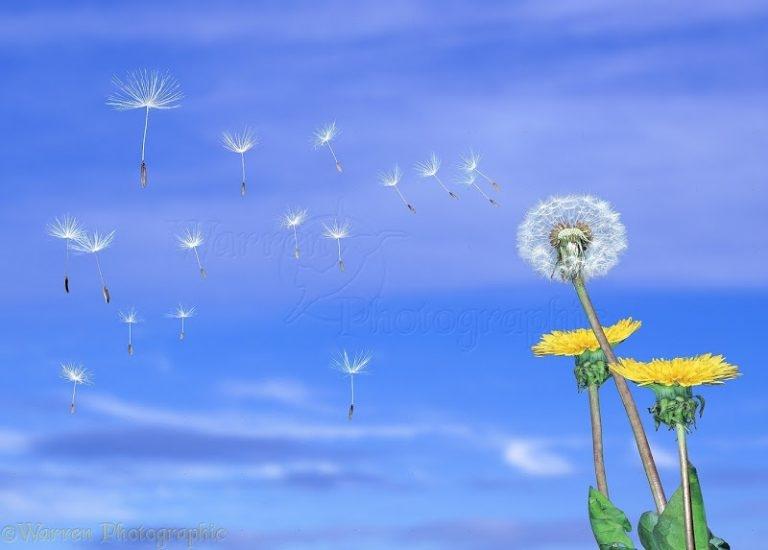 Nếu những cánh hoa không bay trong gió…