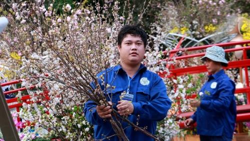 Lễ hội hoa Anh đào Nhật Bản - Hà Nội 2019 khoe sắc dẫu thời tiết không thuận