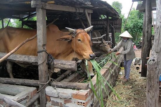 Phạt đến 20 triệu đồng nếu vi phạm quy định về xử lý chất thải chăn nuôi