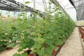 Hiệu quả từ các mô hình nông nghiệp công nghệ cao