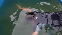 Chuyên gia Nhật Bản thoải mái bơi lội dưới sông Tô Lịch