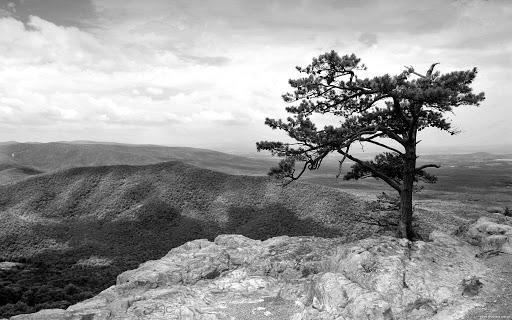 Những cái cây cô đơn…