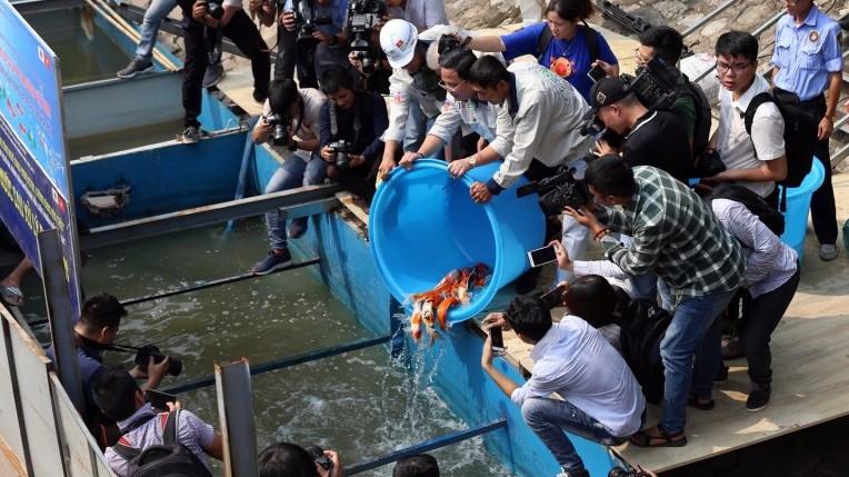Thả cá chép Koi Nhật Bản xuống khu vực thí điểm làm sạch nước sông Tô Lịch