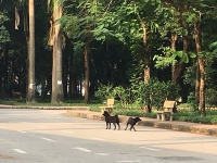 Vẫn còn tình trạng chó thả rông nơi công cộng