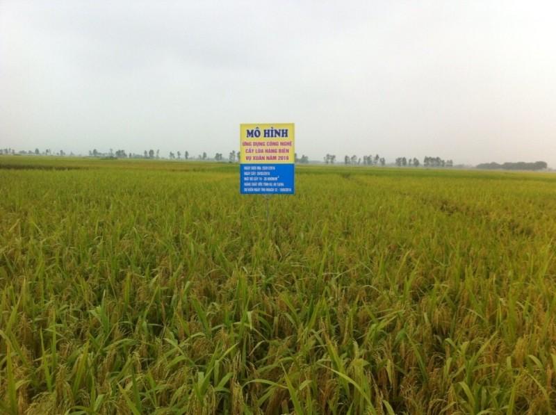UBND huyện Mỹ Đức: Tích cực hỗ trợ người dân phát triển nông nghiệp