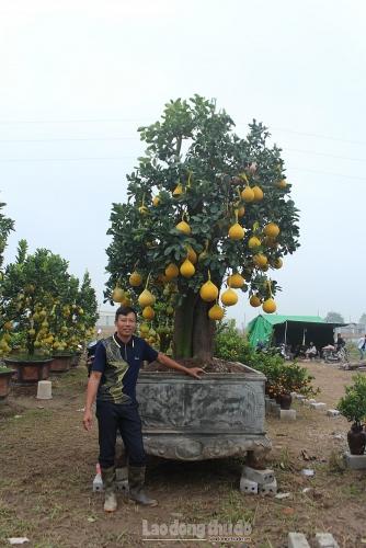 """Chiêm ngưỡng """"cụ bưởi"""" trên 40 năm tuổi có giá vài chục triệu đồng tại Văn Giang"""