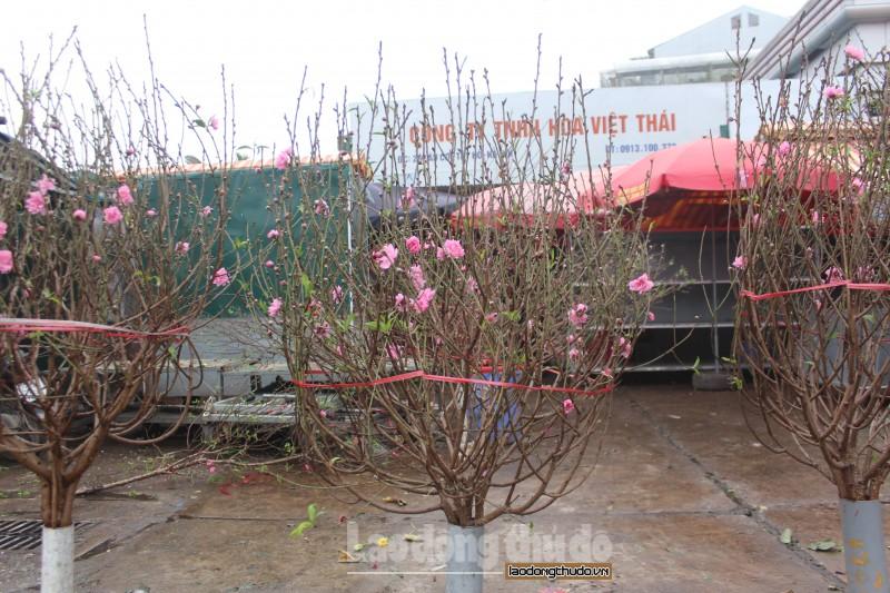 dao nhat tan khoe sac tai cho hoa quang an truoc them tet nguyen dan