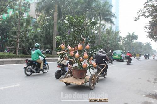 Nhọc nhằn nghề chở hoa, cây cảnh dịp cận Tết