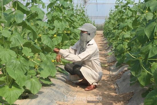 Huyện Ứng Hòa đề ra phương hướng, giải pháp phát triển kinh tế - xã hội năm 2021