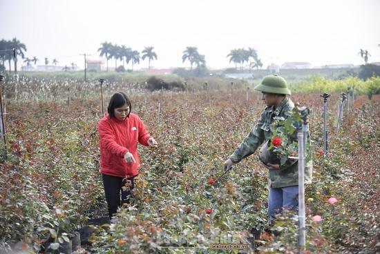 Người dân thôn Hạ Lôi