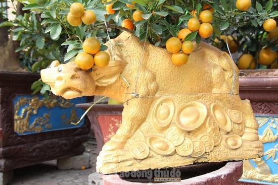 """Trâu vàng """"cõng"""" quất, bưởi cảnh giá khủng xuống phố đón Tết Tân Sửu"""