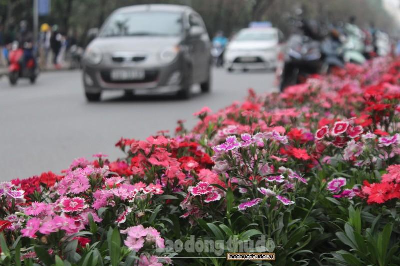 Nhiều tuyến đường Hà Nội rợp hoa trước thềm Hội nghị thượng đỉnh Mỹ - Triều