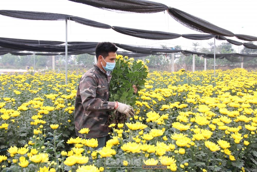 Mê Linh: Hoa Tết giảm giá 50% vẫn lo ế hàng vì dịch Covid -19