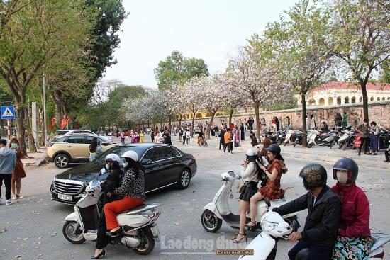 Người dân mê mải chụp ảnh hoa ban, bất chấp lệnh cấm tập trung