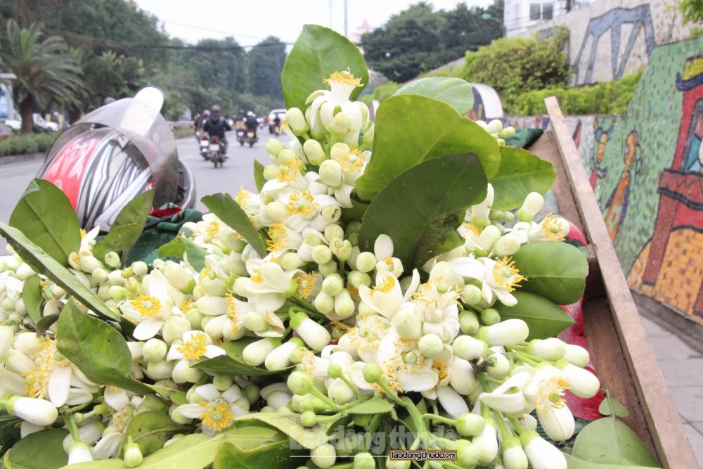 Hoa bưởi được khách hàng săn đón trước ngày Rằm tháng Giêng