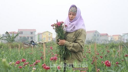 Hoa tươi bất ngờ tăng giá trước ngày 8/3, người trồng hoa Mê Linh phấn khởi