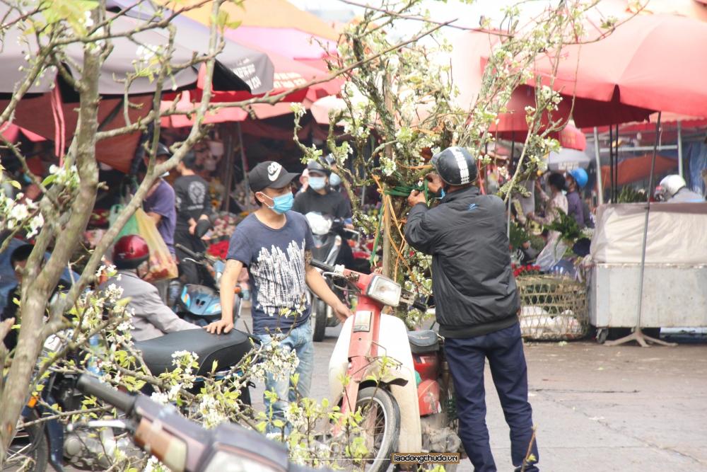 Đến chợ hoa Quảng Bá ngắm hoa lê khoe sắc nở trắng trời