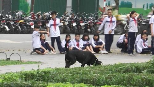 Những nguy cơ tiềm ẩn từ nạn chó thả rông