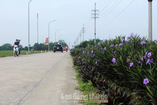 Con đường hoa tím xã Tam Hưng bung sắc giữa mùa hạ