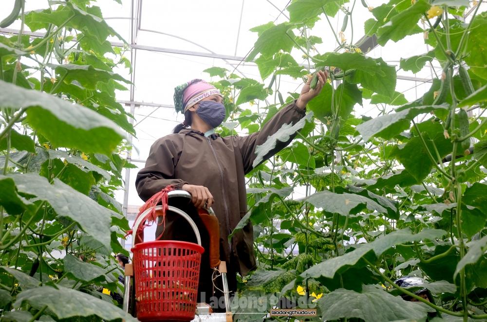 Huyện Thạch Thất nâng cao chất lượng các tiêu chí nông thôn mới