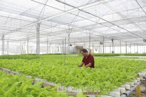 Tập trung xây dựng và phát triển các chuỗi sản phẩm nông nghiệp