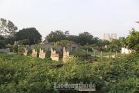 Quy hoạch dự án nghĩa trang tại huyện Thanh Trì: Sẽ dựa theo quy định và tình hình thực tế