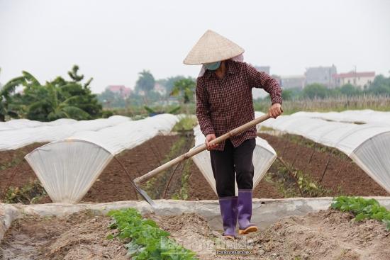 Thời tiết bớt phần nắng nóng, người dân xã Tiền Phong tranh thủ xuống đồng