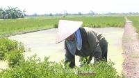 Phát triển kinh tế nhờ trồng rau cần trái vụ