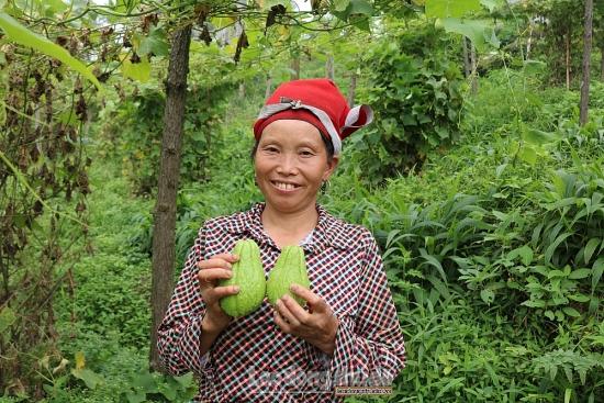 Theo chân người Dao Sa Pa trèo đồi thu hoạch su su